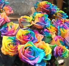 FD709  Rare Rainbow Rose Seed For Your Lover Rainbow Rose Flower 10 Seed*