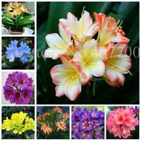 100 pcs/ bag Cheap Clivia Bonsai Indoor Flower seeds Plants For Balcony Potted P