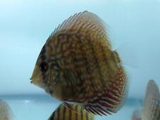 More details for discus fish bargain price !