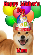 019bf27c0bec Shiba Inu Dog Mother s Day Card Party Hat chmd275 A5 Personalised Greetings