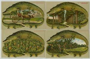4 1910 era Alligator Border Florida Postcards