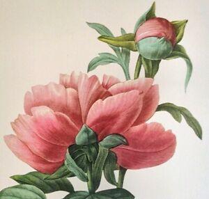 P. J. Redoute Beautiful Flowers CHINESE PEONY Botanical Art Print Book Plate 101