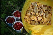 лисички грибы сушеные, 100 grams, земляника сушеная  100 гр, harvest 2018