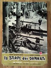 LA STIRPE DEI DANNATI fotobusta poster affiche Children of the Damned 1963 T35