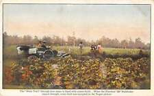 Dixie Trail Flanders 20 Pathfinder Car Advertising Cotton Field Postcard J49486