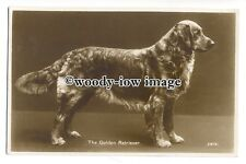 "an0897 - "" The Golden Retriever""  in Competition Pose - postcard"