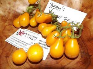 Beam's gelbe Birne Tomate - Tomato 5+ Samen - Saatgut - Seeds - Gemüsesamen