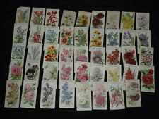 Will's Cigarette Cards - Old English Garden Flowers (45)