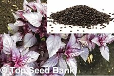 100+ Dark purple opal basil seeds, container friendly + Free Gift   Non-Gmo Seed