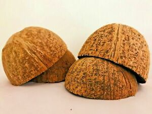 NATURAL COCONUT SHELL HALVES NATURAL 12 SHELL (CASE PACK 2) FREE SHIPPING