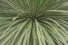 exotische Blüten Rarität Saatgut seltene Garten Balkon Pflanze RAUHSCHOPF