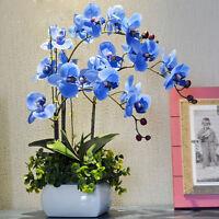 Orchid Seeds Bonsai  Flower Seeds Orchid Plants Indoor Senior Flower Bonsai