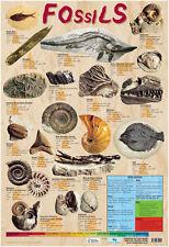 Educational Poster Fossils KS2 / KS3 (0118)