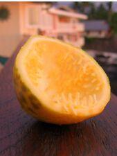 lilikoi Fruit Seeds 20 (lilikoi Vine)passion Fruit