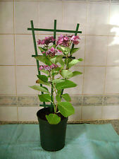 2 X CLIP ON PLASTIC PLANT POT  TRELLIS / SUPPORT FOR CLIMBING PLANTS