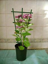 6 X clip in plastica VASO Traliccio/Sostegno per piante rampicanti