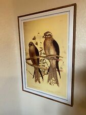 Allied Kite And Square-Tailed Kite Print In The Frame