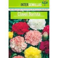 Claveles Florista en sobre de colores semillas 150 aprox. Dianthus caryophyllus