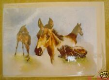 Lovely Foal Greeting Card Margaret Hawkes
