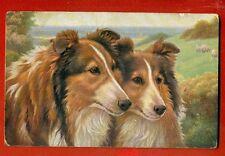 Dog Collie Vintage Postcard 361