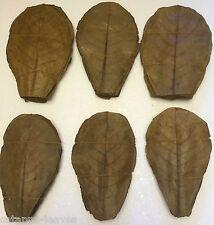 Seemandelbaumblätter günstig 100x20cm 1AQualität - Natürliche Wasseraufbereitung