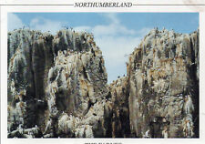 Postcard  Northumberland The Farnes  SPN024 unposted