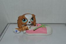 Littlest Pet Shop~#1825~King Charles Spaniel~Dog~Brown White~Aqua Eyes~Pink Shoe