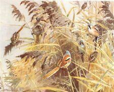 """REED TlTS. """"Autumn Gathering"""" by WINIFRED AUSTEN 1935 old vintage print"""