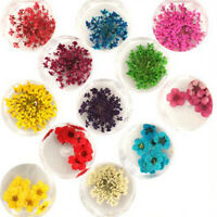12 Color Real Dry Dried Flower3D Decoration for UV Gel Acrylic Nail Art Tips PK