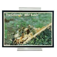 RPPC Vintage Real Photo Postcard COLORADO GROUND SQUIRRELS Wild Unposted NEW