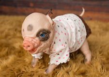 """ReBoRn BaBy PiGLeT """"FaWn"""" RooTeD HeAd ~ MaGnEtiC PaCiFiEr"""
