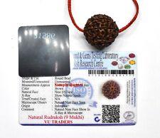 9 Mukhi Rudraksha / Nine Face Rudraksh Java Bead Lab Certified Size 23 - 24 MM