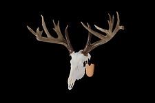 European Skull Mount Bracket   Skull Hook, Deer, Bear