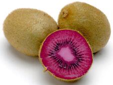 Kiwi Seeds - PINK LADY - Great Houseplant - RARE TROPICAL FRUIT - 50 Seeds