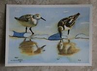 Sandpiper 5, Bird, Ocean, Nautical, Original Watercolor Painting, Signed, Art
