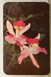 Scenic Orchids to You America's Sweetheart Postcard Old Vintage Card View Postal