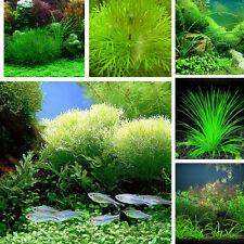 1000X Fish Tank Aquarium Mixed Grass Seed Weeping Moss-Live Fern Aquatic Plant A