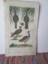 Vintage Print,TROPICAL NEST,Animated Nature,Goldsmith,1822