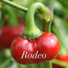 Rodeo Hot Chilli Pepper Seeds x 20