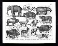 1874 Bilder Atlas Zoology Print - Elephant Hippopotamus Buffalo Musk Ox Ram Goat