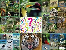 Postkarten-Sammlung mit 50 St. 3-D- und Wackelkarten mit Tiermotiven