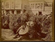LE CAIRE c. 1900 - Chameaux Place du Marché Egypte - aa930