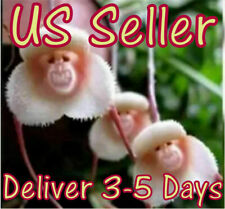 Monkey Face Orchid Flower Seeds Plant Seed Bonsai Home Garden Japanese Set 5 Pcs