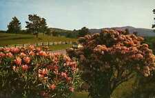 SOUTHERN APPALACHIANS NC VA Rhododendron Mt. Laurel Rail Fence z postcard