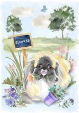 "Pekingese Dog (4"" x 6"") Blank Card / Notelet Design By Starprint"