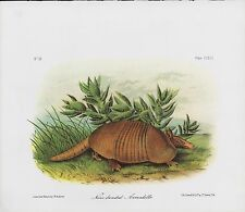 "1989 Vintage ""NINE BANDED ARMADILLO"" AWESOME AUDUBON MAMMAL COLOR Art Lithograph"