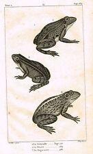 "Lacepede's Oeuvres du Comte - ""LE GRENOUILLE - FROG"" - Lithograph - 1833"