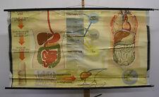 Wandbild Ernährung Zahn Magen Darm Doktor 168x90cm vintage doc wall chart ~1960