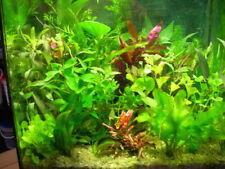 lot de 35 touffes de  plante  aquarium