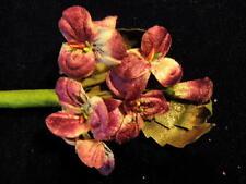 Millinery Flower Velvet Pansies Purple Pink for Hat Wedding + Hair Y239